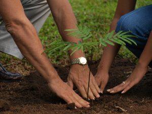April Colorado Insect Checklist - ArborScape Colorado Tree Service, tree trimming, tree removal, stump removal
