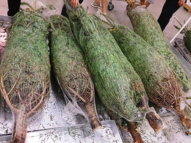 shopping for your christmas tree online - ArborScape Denver Tree Service Blog