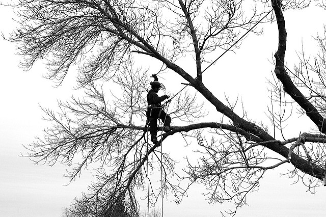 How to Choose a Tree Service - Tips from Arborscape