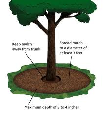 Back to School Tree Care