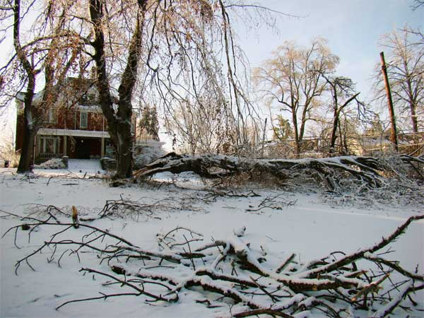 ArborScape's Denver metro resources for storm-damaged tree debris disposal