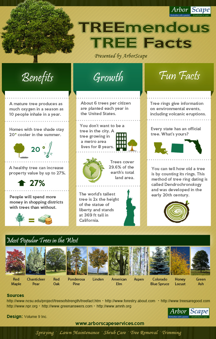 Infographic on Interesting Tree Facts - ArborScape