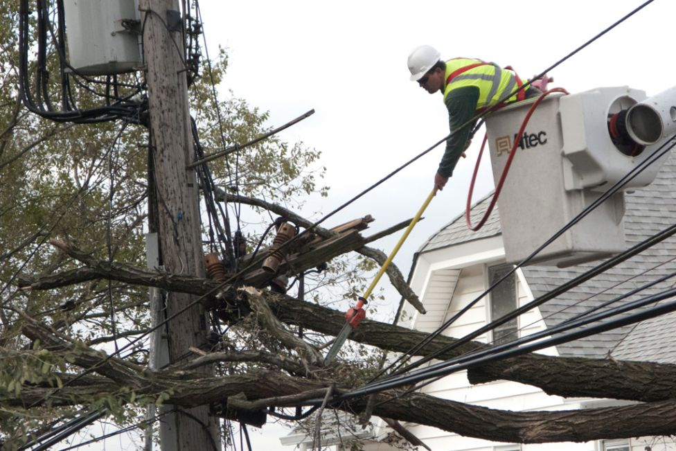 tree_trimming_power_line_collapse