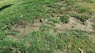 Lawn Fertilizing Service