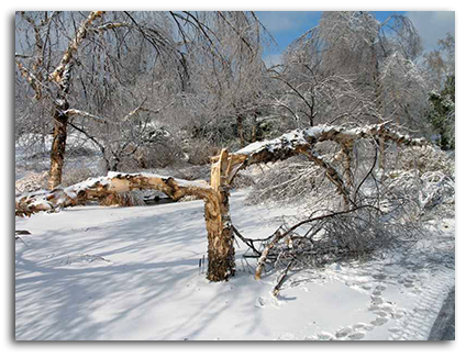 spring snowstorm tree damage cleanup on ArborScape Denver Tree Service blog