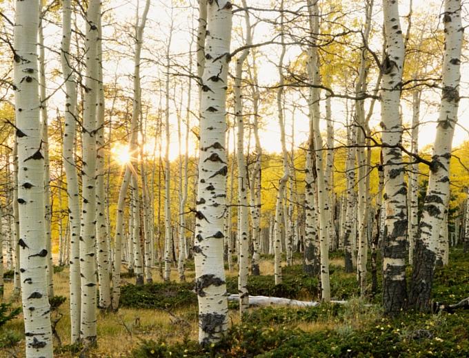 fertilization in the Fall - ArborScape Denver Tree Service Blog