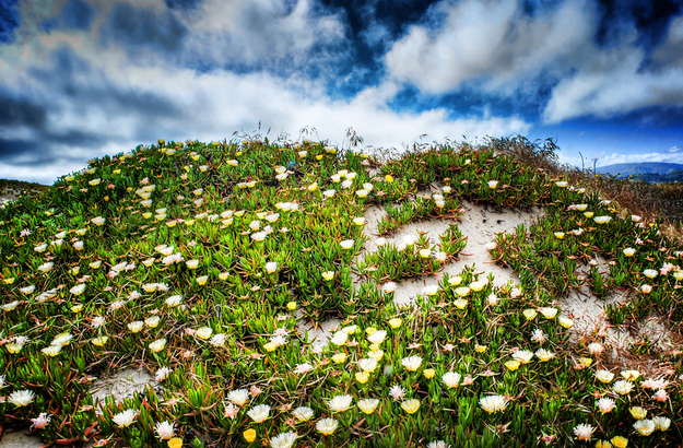 image of crowded plants growing thickly on hillside