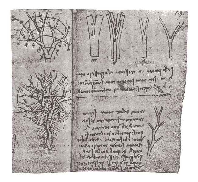 page from Leonardo Da Vinci's notebook detailing his theory of trees