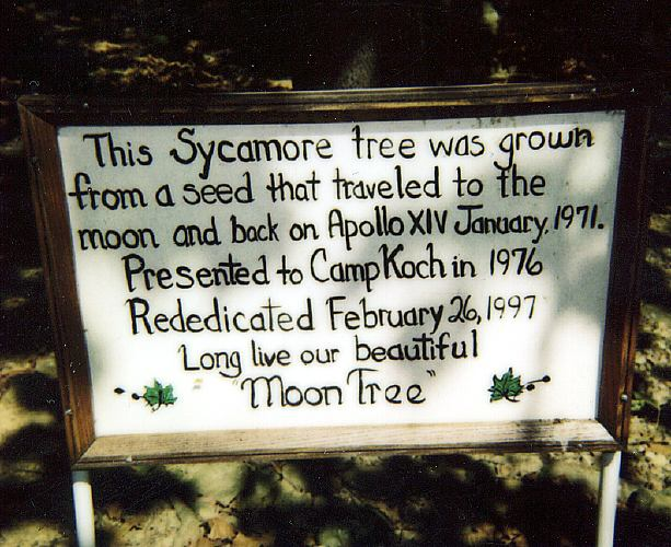 moon_tree_plaque - friday tree facts: the moon trees - ArborScape Tree Service Denver blog