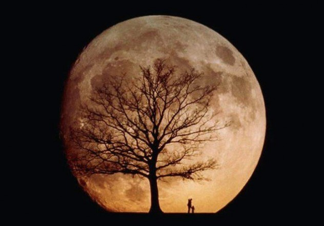 a tree silhouetted against the full moon- friday tree facts: the moon trees - ArborScape Tree Service Denver blog