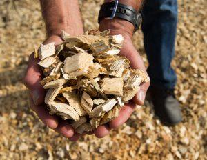 Boulder puts EAB-killed ash wood to constructive reuse - Arborscape Denver Tree Service blog