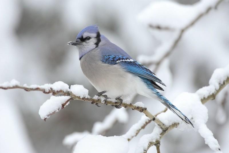 habitat responsibility Arborscape and NREL on ArborScape Denver Tree Service blog