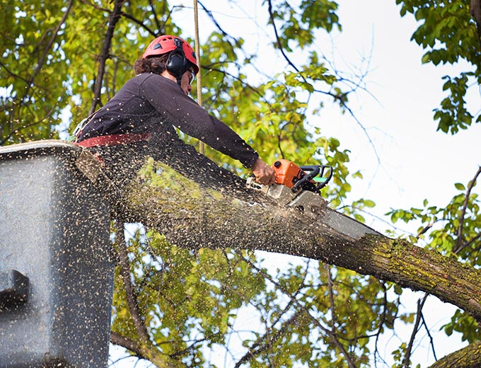 Denver Tree Removal Service
